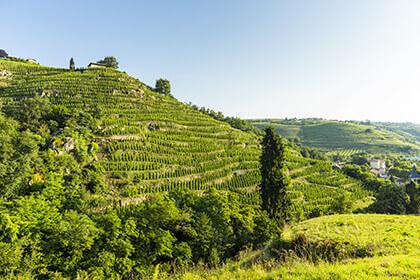 appellation Condrieu - Clos Boucher - vignoble