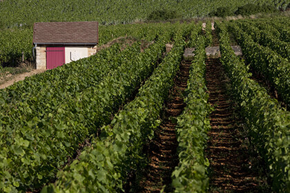 Appellation Corton