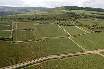 Montrachet wine at Joseph Drouhin