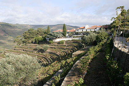 PortWein Douro