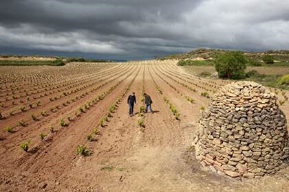 La Rioja vineyard