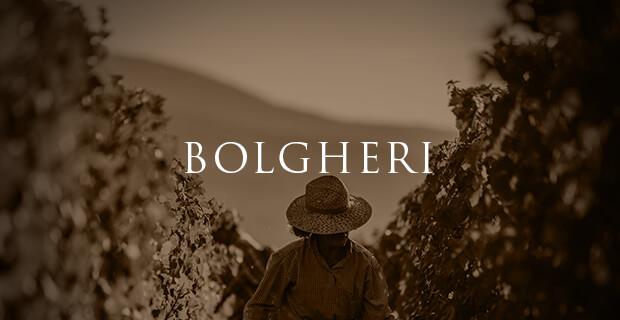 vini Bolgheri