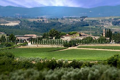 Vignoble Brunello di Montalcino - Italie - Toscane