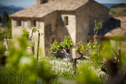 Chateauneuf-du-Paper; Famille Perrin