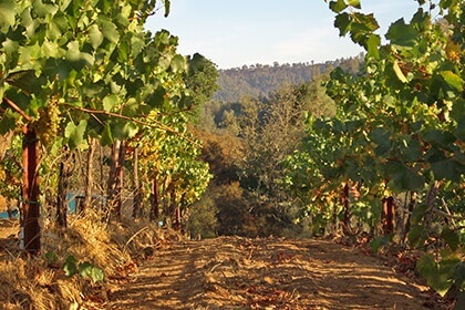 Calera Wine Company
