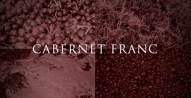 cabernet franc, uva, vitigno