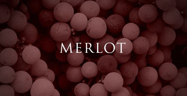 Cepage Merlot