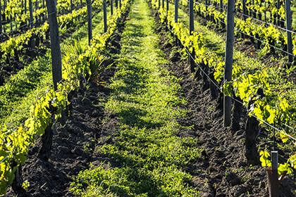 François Poincet organic wines