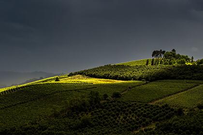Italian wines, Bruno Rocca