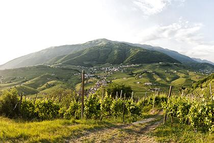 Italian wines, Mattia Mionetto - Bisol