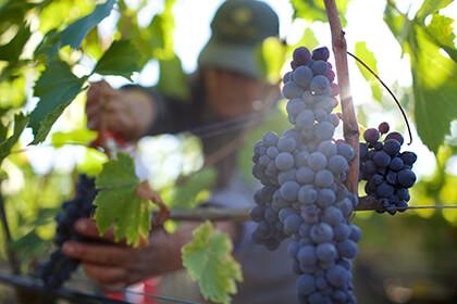 Italian wines, Tenuta Luce della Vite
