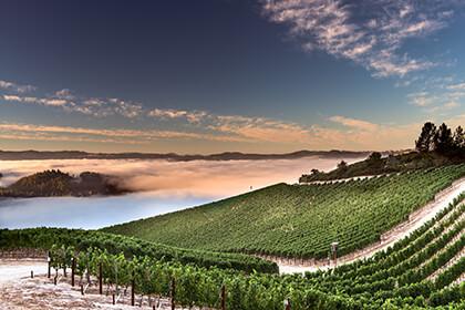 Peter Michael Winery vineyard