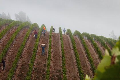 Peter Michel Winery vineyard
