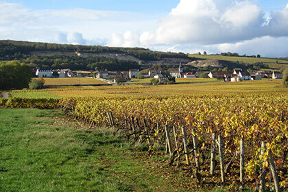 Château de la Maltroye vineyard