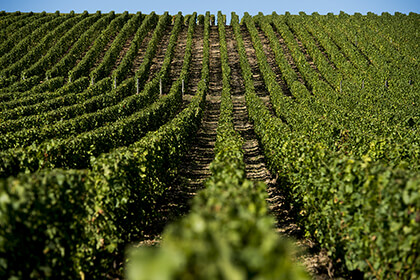 Alphonse Mellot vineyard