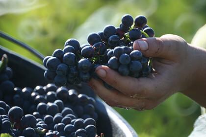 Maison Louis Jadot Bourgogne Pinot noir