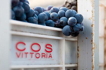 Raisins Azienda Agricola COS Vittoria