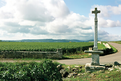 Domaine Leflaive in Burgundy