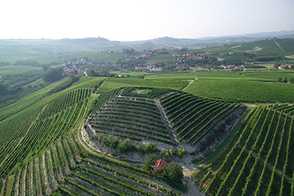 Oddero vineyards
