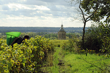 Clos de Bourg vineyard at Domaine Huet
