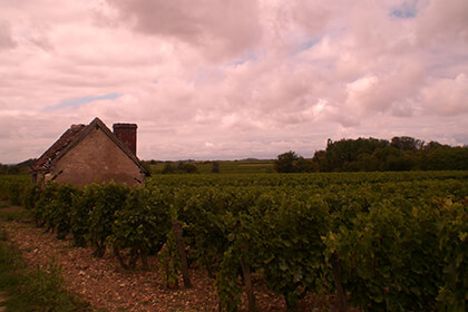 In the vineyards of Domaine Huet
