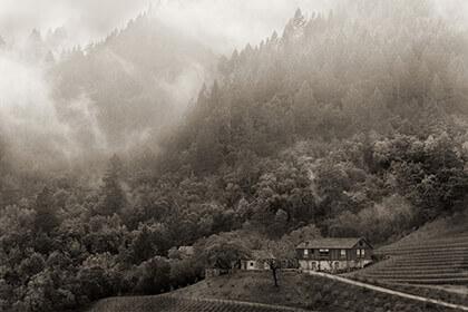 BOND wines vineyard