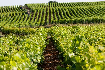 Domaine Dujac wines