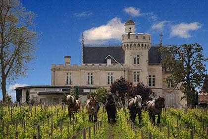 Chevaux dans les vignes du Château Pape Clément Grand Cru Classé de Graves