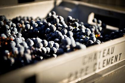 Château Pape Clément Grand Cru Classé de Graves raisins vendanges