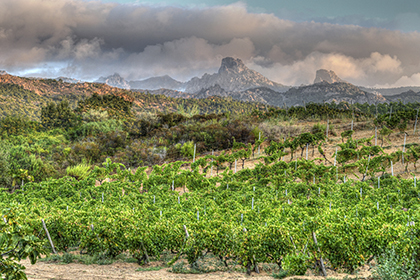 Vignoble Clos Canarelli Corse du Sud