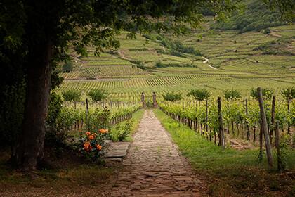 Domaine Weinbach wine