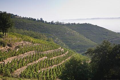 Vue du vignoble de la maison en Côte-Rôtie dans la Vallée du Rhône © E.Guigal SA