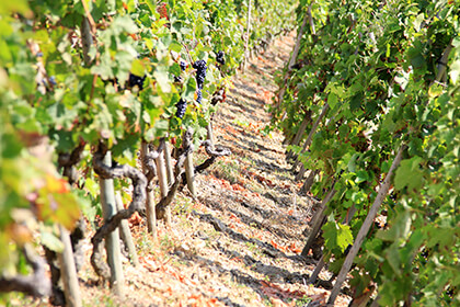 Vue du vignoble de la maison dans la Vallée du Rhône © E.Guigal