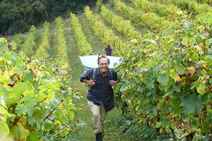 Nicolas Joly in the vineyard