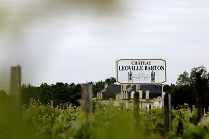 Chateau Leoville Barton vineyard