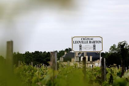 Chateau Leoville Barton vineyard