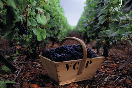 Traubenauslese im Hause Veuve Clicquot