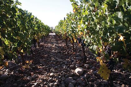 The Almaviva terroir, soils
