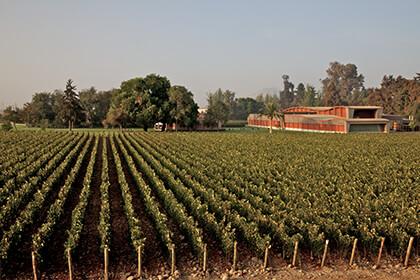 The Almaviva winery