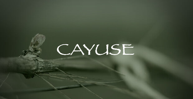 Cayuse Vineyards; Cayuse wines