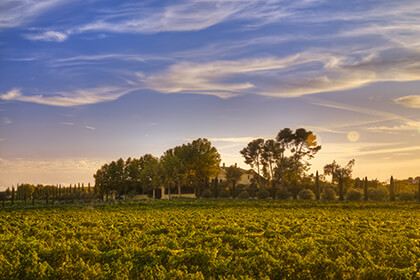 The Torres wine terroir
