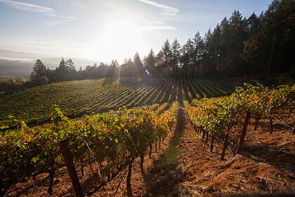 Frias Family Vineyard : Frias wines