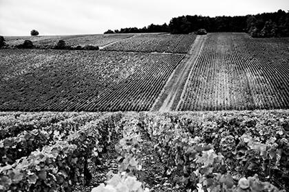 Patrick Piuze in Burgundy