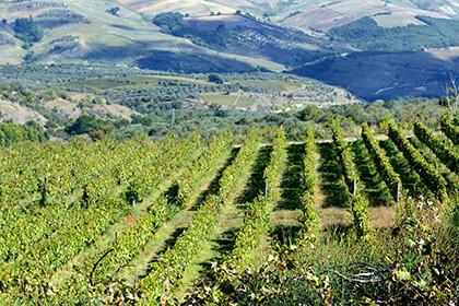 Azienda Agricola Elena Fucci - vignoble - Italie du Sud