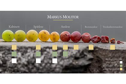 Vignoble Markus Molitor - Hiérarchie vins allemands
