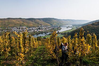 Steile Rebhänge des Weinguts Markus Molitor
