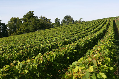 Vignoble Château Gloria
