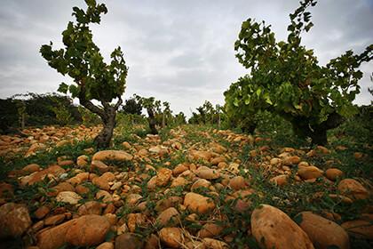 Terroirs Vallée du Rhône méridionale