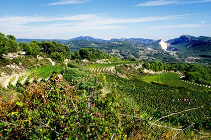 Vignoble du château de Pibarnon en Provence Bandol