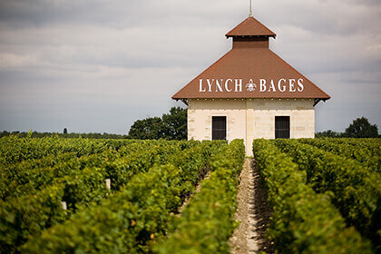 Château Lynch-Bages, Château Lynch-Bages vineyard